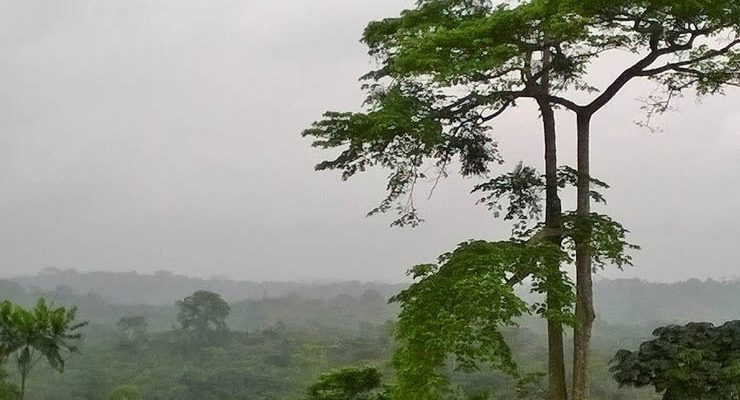 SIAF project: IGN FI brings its expertise to the gabonese ministry in charge of the forest economy
