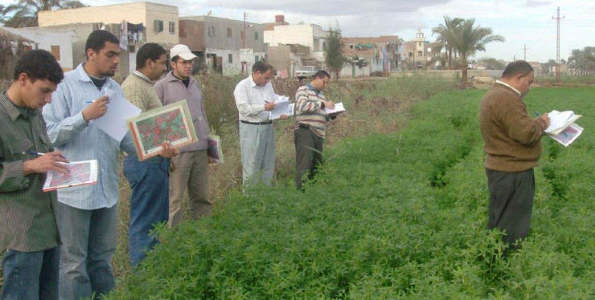 Inventory of crops (CIPA), EGYPT