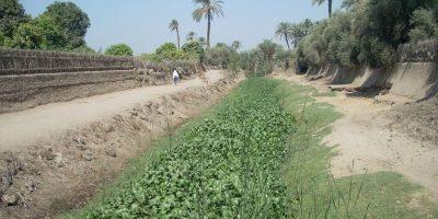 Évaluation de l'évolution de l'invasion de la jacinthe d'eau, ÉGYPTE/SOUDAN