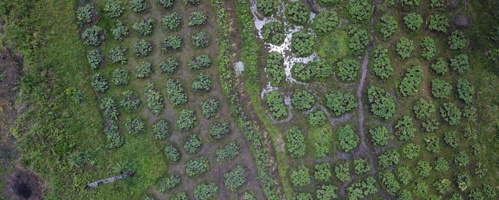 Reportage de RFI sur le projet de zonage agro-écologique de la Guinée