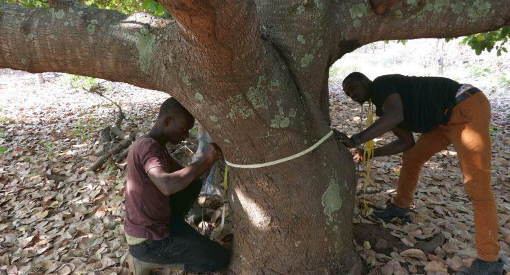Inventaire forestier et faunique national (IFFN) : la phase d'inventaire s'achève