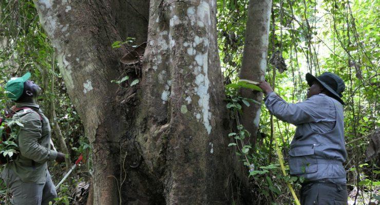 L'inventaire forestier et faunique national (IFFN) présentera ses résultats le 29 juin 2021